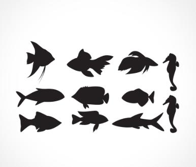 adesivo_murale_pesci