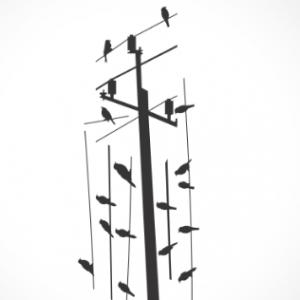 adesivo_murale_uccellini
